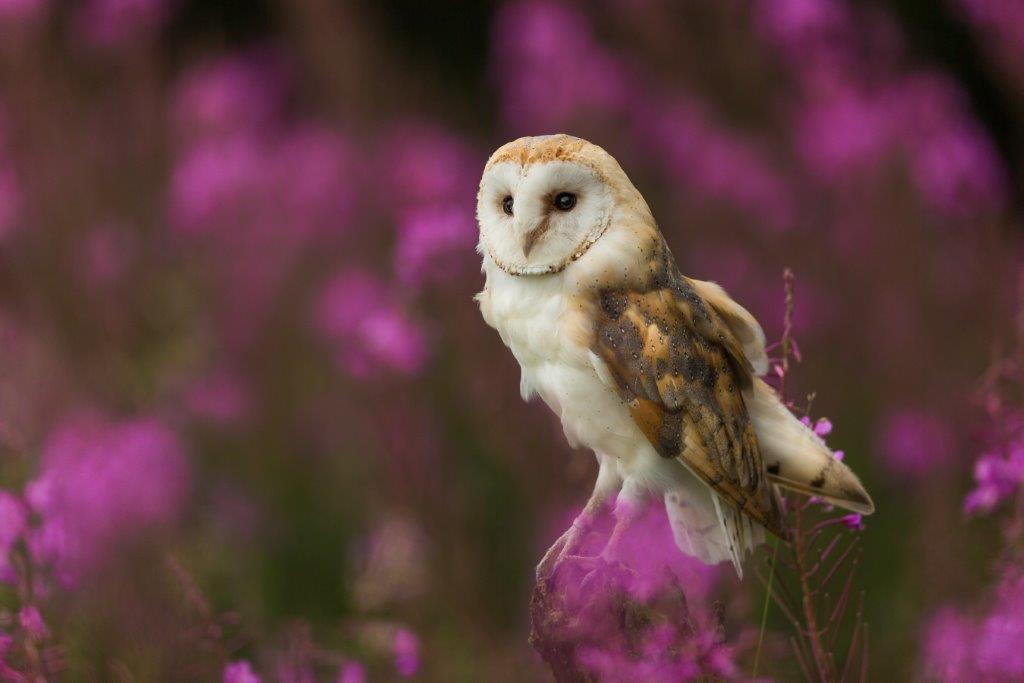 Bird Surveys | Protected Species